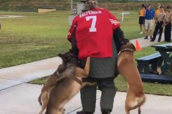 Mỹ điều tra việc chó của SEAL xông vào người phản đối kỳ thị chủng tộc