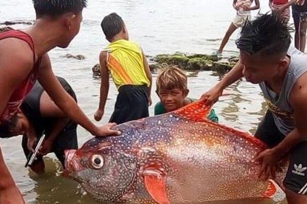Bắt được cá mặt trăng 65 kg sau động đất mạnh ở Philippines