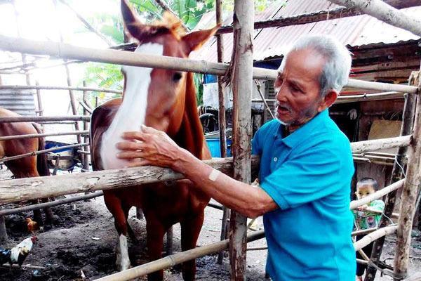 Kết buồn 'vua ngựa' Năm Gò Công: Cùng chiến mã sống rìa nghĩa trang Sài Gòn
