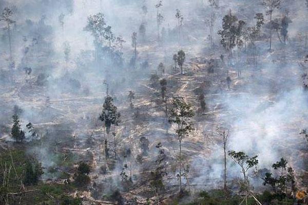 UN hỗ trợ Indonesia đối phó cháy rừng và biến đổi khí hậu