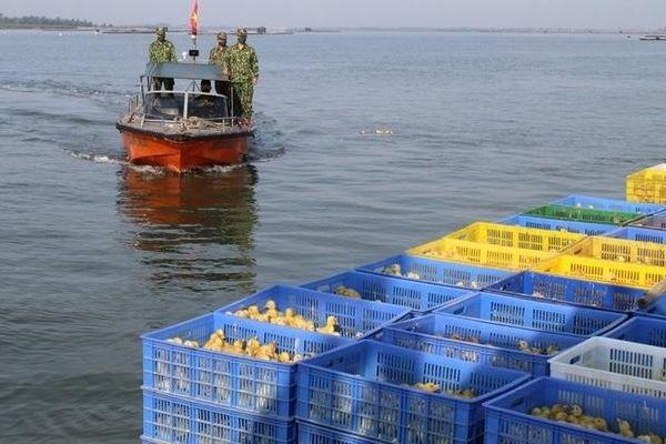Quảng Ninh: Bắt giữ lượng lớn vịt giống vận chuyển trái phép trong đêm