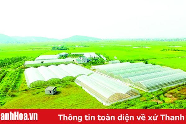 'Mắt xích' quan trọng trong chuỗi giá trị và xây dựng nông thôn mới