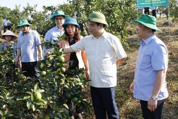 Supe Lâm Thao: Hiệu quả từ cung ứng phân bón chậm trả cho nông dân tỉnh Phú Thọ