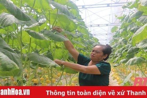 Thị trấn Thiệu Hóa phát triển mô hình nông nghiệp công nghệ cao