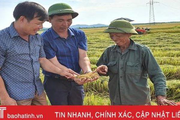 Gieo đúng lịch, cơ giới hóa trong sản xuất, huyện Kỳ Anh 'về đích' thu hoạch lúa hè thu