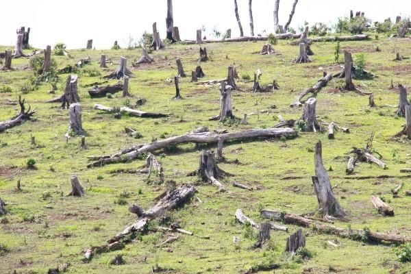 Để mất hàng trăm hecta rừng, 2 trưởng ban ở Gia Lai bị khởi tố