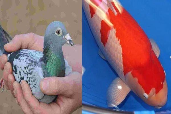 Chiêm ngưỡng những con vật có giá đắt đỏ nhất hành tinh