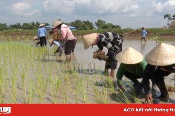 Tiềm năng du lịch nông nghiệp Núi Tô