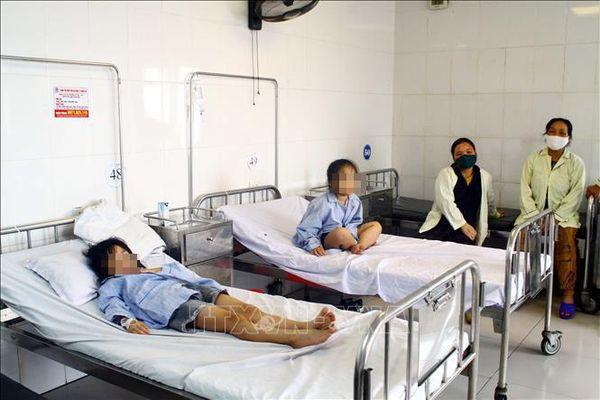 Tất cả học sinh bị ong đốt ở Nghệ An đều đi học bình thường trở lại