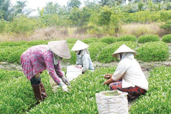 Nhiều chính sách hay, giảm nghèo bền vững tại Tiền Giang