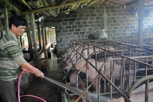 Thắng đậm vụ lợn tăng giá, chia nhau trăm tỷ tiền lãi