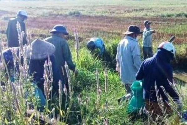 TT - Huế: Ngày Chủ nhật xanh trên đồng ruộng
