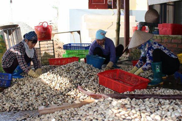 Thủy sản Nam Định phát huy lợi thế