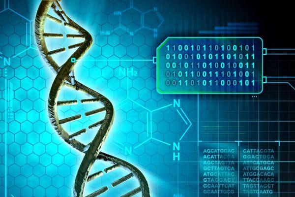 DNA của con người có thể thay thế ổ cứng để lưu trữ dữ liệu?