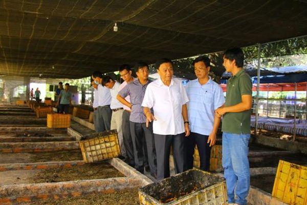Đẩy mạnh hỗ trợ nhân rộng các mô hình sản xuất nông nghiệp hiệu quả