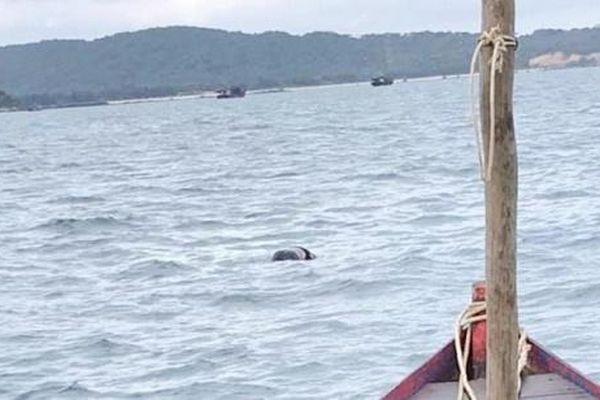 Phát hiện thi thể người đàn ông trôi dạt trên biển ở Cô Tô
