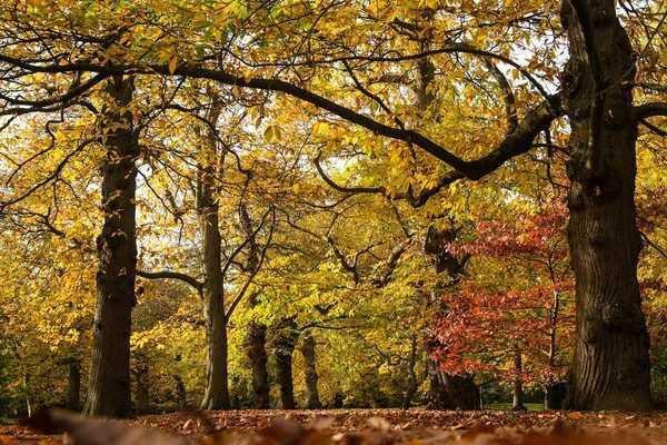 10 địa điểm ngắm mùa thu vàng đẹp xiêu lòng ở Mỹ