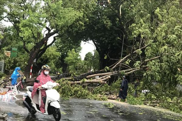 Cán bộ phòng Giáo dục và Đào tạo TP. Huế bị cây đè tử vong trong bão số 5