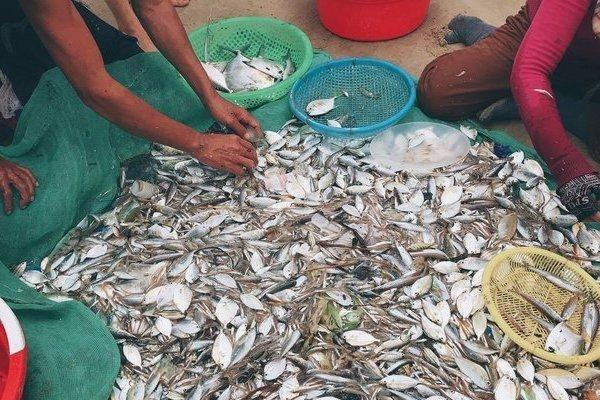 Kiếm bộn tiền với 'đặc sản' kéo cá sau bão