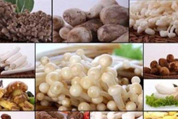 7 lợi ích tuyệt vời của nấm với phụ nữ mang thai