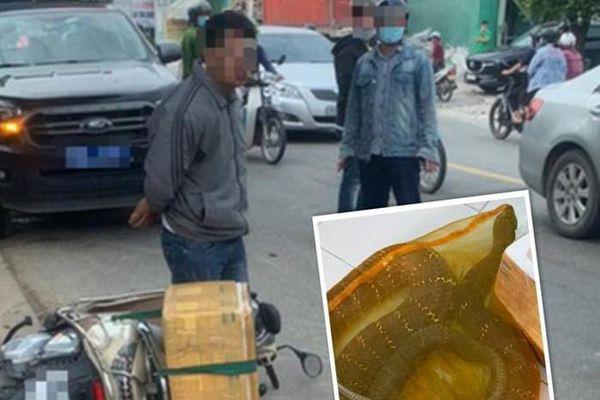 Tạm giữ người chở rắn hổ chúa 20kg mua từ Campuchia