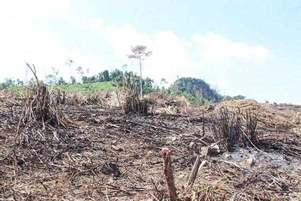 Công ty Lâm sản Khánh Hòa: Nỗ lực phối hợp giữ rừng
