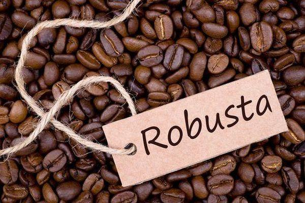 Giá cà phê hôm nay 26/9: Thị trường thế giới tăng do đầu cơ kéo cà phê Tây Nguyên thêm 100 - 200 đồng/kg