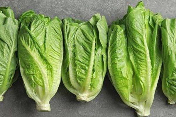 Nghiên cứu cho thấy, một số rau xanh dễ có khuẩn E. coli