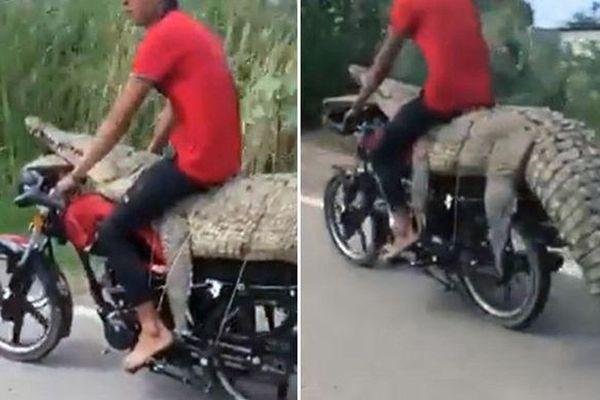 Người đàn ông ngồi lên lưng cá sấu trên xe máy phóng giữa đường