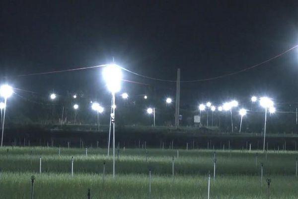 Đèn bẫy bướm trên 'thủ phủ' hành tím ở Lý Sơn sáng rực như sao trời về đêm