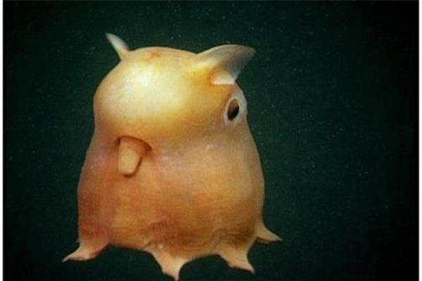 Những loài động vật kỳ lạ nhất thế giới
