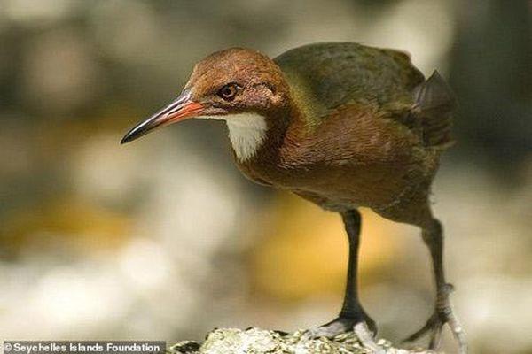 Những sinh vật tuyệt chủng bất ngờ 'sống dậy từ cõi chết'