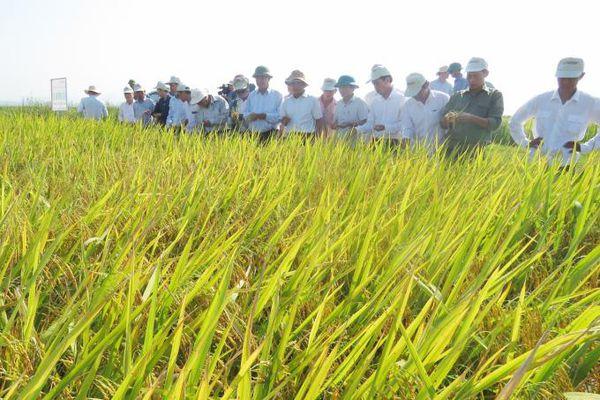 Cánh đồng lớn đẹp nhất Quảng Bình