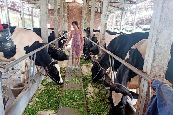 Vĩnh Tường: Tìm lời giải đưa chăn nuôi ra ngoài khu dân cư