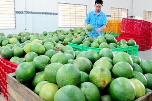 Trái cây Việt tăng tốc sang Mỹ