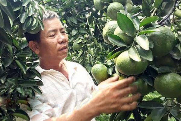 Bình Phước xây dựng định hướng phân vùng kinh tế vườn