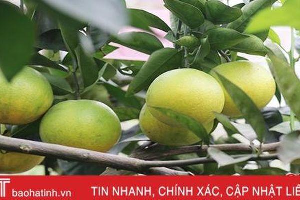 Ngọt thơm cam Nam Điền!
