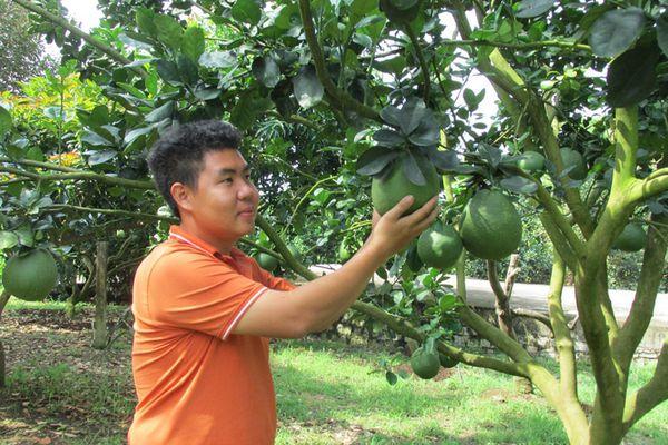 An toàn với các sản phẩm nông nghiệp hữu cơ