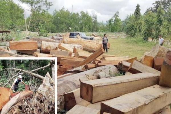 Xem xét trách nhiệm của nguyên Giám đốc Sở NN&PTNT Gia Lai vì để mất rừng
