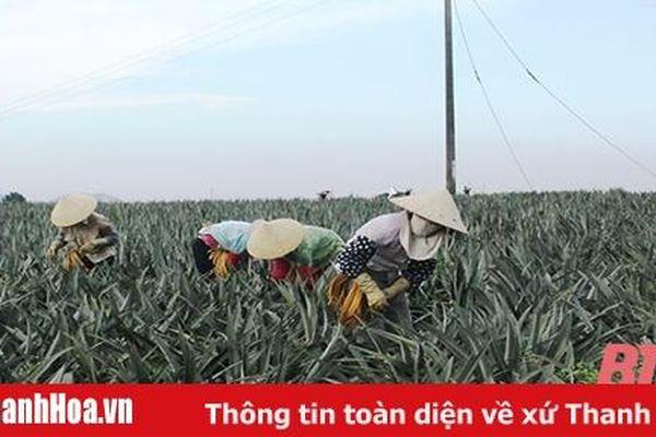 Phát triển vùng nguyên liệu gắn với chế biến nông sản