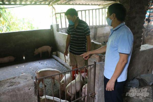 Hà Nội sẽ không còn chăn nuôi trong đô thị