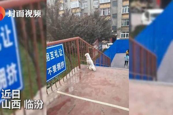 Bị dịch COVID-19 chia cắt, chú chó đợi bạn trên cầu bất kể nắng mưa