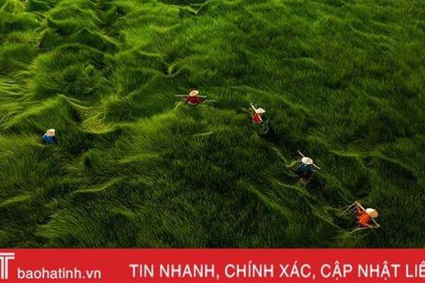 Nhiều ảnh chụp Việt Nam đoạt giải Aerial Photography Awards 2020