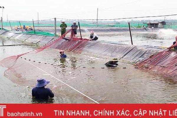 Người nuôi trồng thủy sản Lộc Hà 'trắng tay' sau trận lũ lịch sử