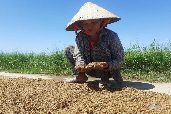 Chính sách hỗ trợ ổn định sản xuất nông nghiệp sau thiên tai