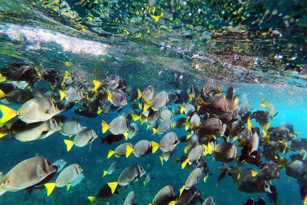 Tàu Trung Quốc và Covid-19 đe dọa 'đấu trường cá' Galapagos