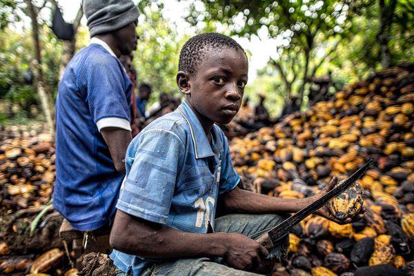 Những 'công nhân nhí' trong ngành công nghiệp chocolate tỷ USD