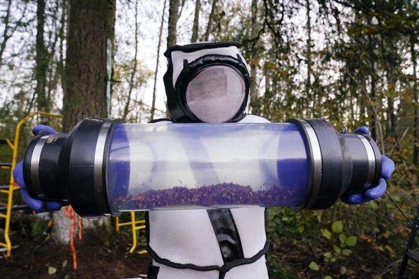 Mỹ phá hủy tổ ong vò vẽ châu Á xâm lấn đầu tiên