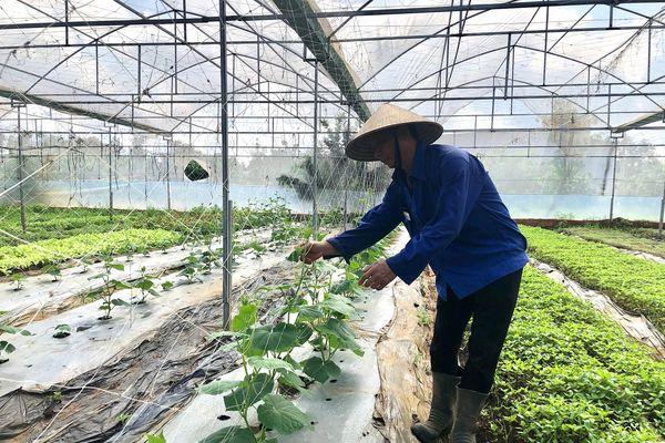 Sản xuất nông nghiệp sạch giúp bảo vệ môi trường