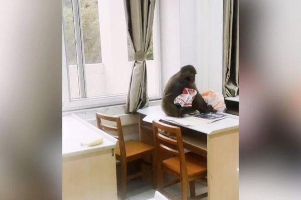Khỉ đột nhập vào lớp học